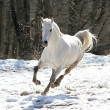 Royalty-Free Stock Photo: Skipping white horse