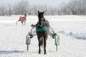 Horse on a white snow — Stock Photo