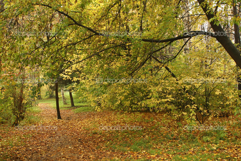 Autumn Park — Stock Photo #1094933