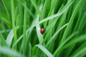 Red bug — Stockfoto