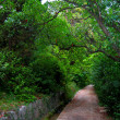 Walks in the botanical garden - Stock Photo