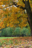 Golden autumn in the city park — Stock fotografie
