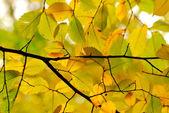 Goldener herbst im stadtpark — Stockfoto