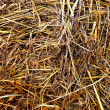 Royalty-Free Stock Photo: Background hay