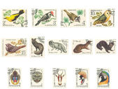 Canceled Stamps With Animals — Stock Photo