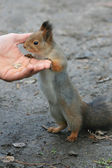 Feeding Squirel — Stock Photo