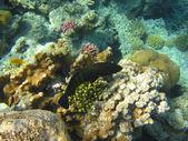 Colorful tropical fish — Стоковое фото