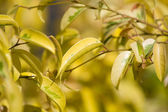 Folhas jovens — Fotografia Stock