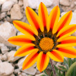 Stock Photo: Bright spring flower