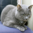 Gray Cat — Stock Photo