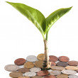 Royalty-Free Stock Photo: Young plant over a coins