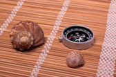 Shellfishes and compass — Stock Photo