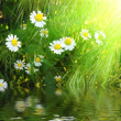 Flowers in grass — Stock Photo