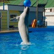 Dolphin playing with ball — 图库照片