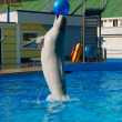 Dolphin playing with ball — Stock fotografie
