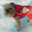 Stock Photo: To each doggie in coldly winter