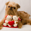 Brussels Griffon — Stock Photo #1022831