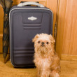 Royalty-Free Stock Photo: Suitcase, umbrella and dog.