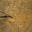 Tree rings — Stock Photo #1048581