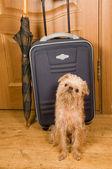Suitcase, umbrella and dog. — ストック写真