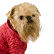 Dog  in the red jacket — Stock Photo