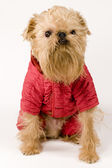 Dog in red jacket — Stock Photo