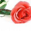 Red rose — Stock Photo #1012539