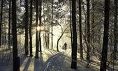 In winter park — Stock Photo