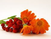 Red rowanberry and yellow flowers — Stock Photo
