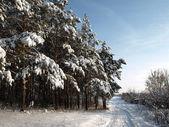 Orman yolunda — Stok fotoğraf