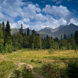 Stock Photo: Alpine grasslands