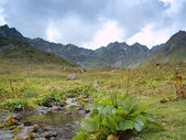 Alpine grasslands — Stock Photo