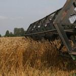 Harvesting — Stock Photo #1019575