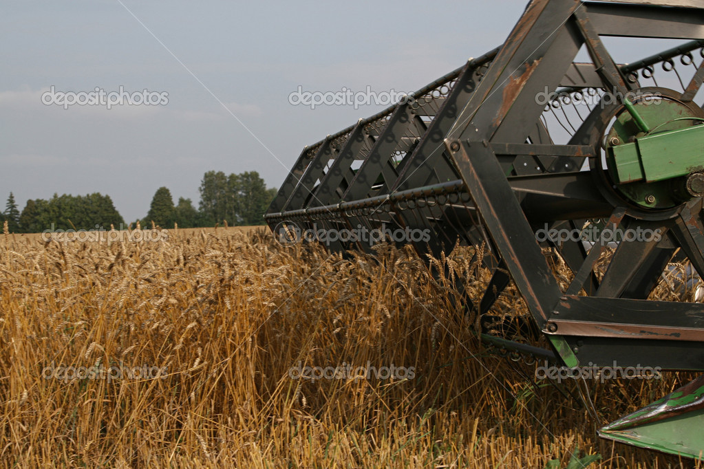 With help of combine in autumn is harvested crop. — Stock Photo #1019575