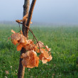 Stock Photo: Oak bough