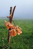 Oak bough — Stock Photo