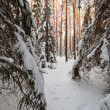 Royalty-Free Stock Photo: Forest in winter
