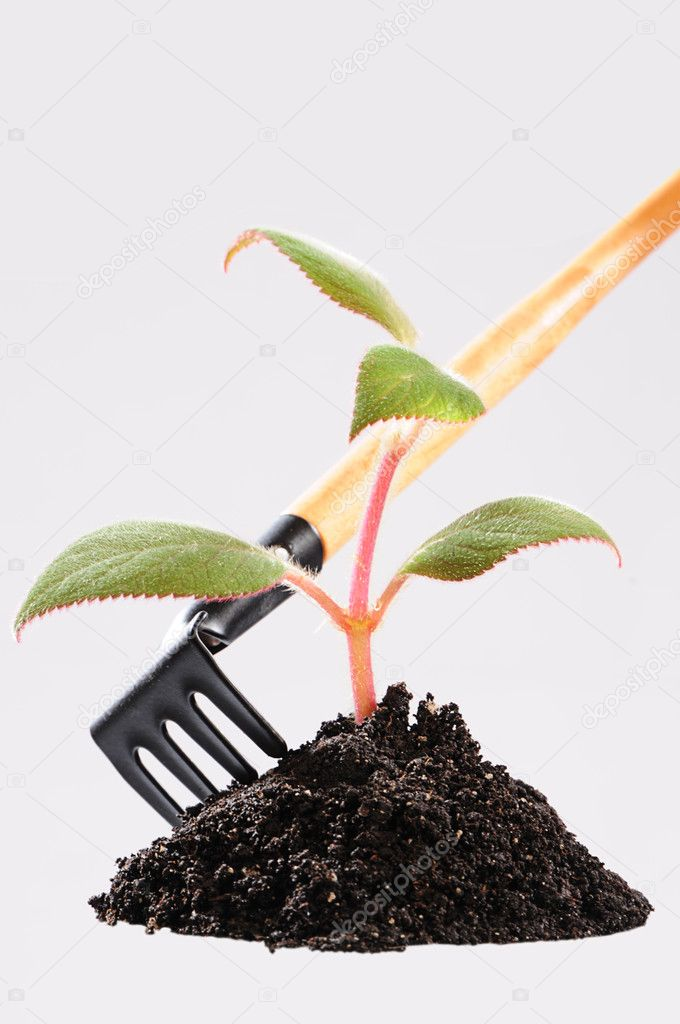 Care for seedlings — Stock Photo #1019839