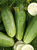 Cucumbers and their seed — Stock Photo