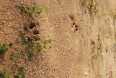 Footprint — Stockfoto