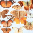 图库照片: Old home collection of butterflies