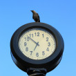 Stock Photo: Crows watching time