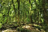 Floresta de conto de fadas — Foto Stock