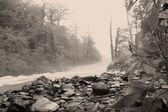 朝の霧 — ストック写真