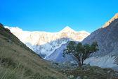 árvore solitária — Foto Stock