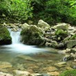 Purely clean mountain stream - Stock Photo