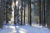 Frosty sonnentag — Stockfoto