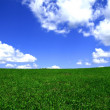 Stock Photo: Blue sky and meadow background.