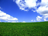 Blue sky and meadow background. — Stock Photo