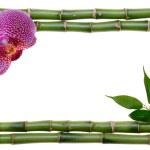 marco de bambú — Foto de Stock